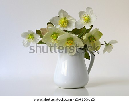 Still life with bouquet of spring flowers hellebores in vase. Flower is also called Christmas rose, Lenten rose, Black hellebore, Winter rose, Helleborus niger. Blooms in late winter and early spring