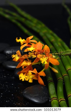 still life with branch orange orchid with stones and thin bamboo grove
