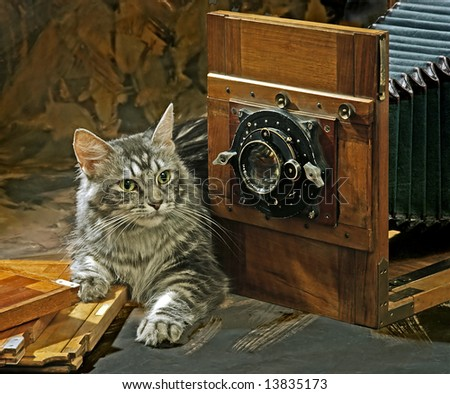 still life with cat and old camera