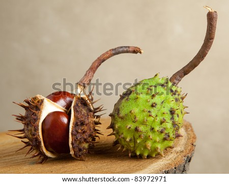 Still life with chestnuts on a tree trunk