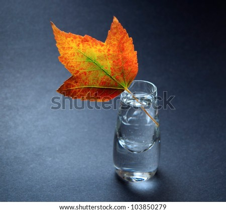 Still life with colourful autumn leaf in small glass vase