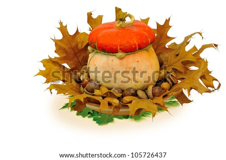 Still-life with decorative medicinal  pumpkin, acorns and oak  leafs isolated on white