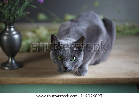 Still-Life with Flowers and Russian Blue Cat