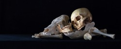 Still Life with Human skull and Animal skull on pile of bone in dark Halloween night / Selective focus and space for texts, adjustment size for header, banner, cover