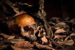 Still life with human skull in a pile of leaves on background