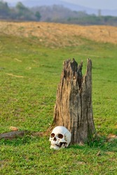 still life with human skull in dry field background.
