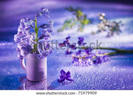 Still life with hyacinth flower in gentle violet colors and magic bokeh