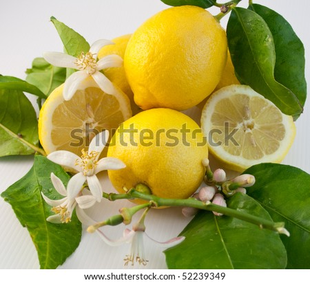Still life with lemon, leaf and flower