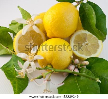 Still life with lemon, leaf and flower