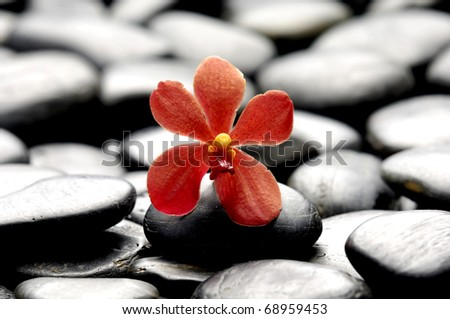 still life with macro of orchid on pebble