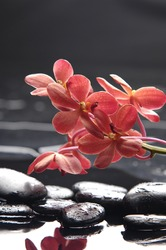 still life with macro of red orchid on pebble