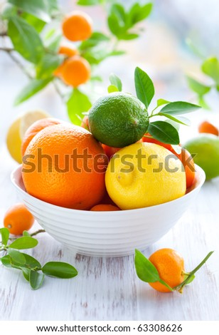 Still life with oranges, lemons,limes,kumquats,calamondin and mandarins