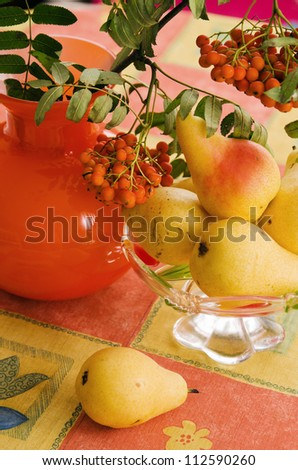 Still-life with pears and a branch of a mountain ash on a table