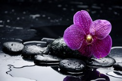 still life with pebble and orchid with water drops