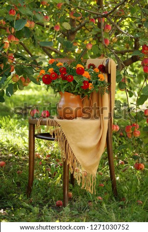 still life with red zinnias on a chair under an apple tree #1271030752