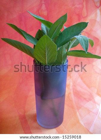 still life with sage in the glass