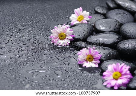 Still life with set of pink gerbera and stones - stock photo