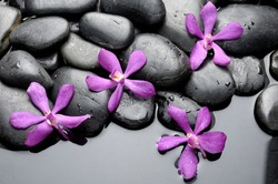 Still life with set of pink orchid on pebble