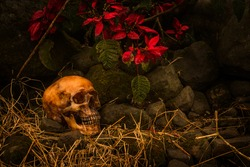 still life with skull human in overgrown tree