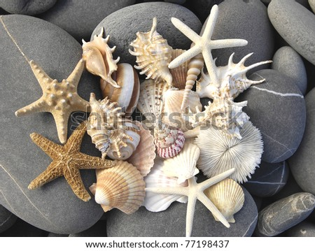 still life with starfish, pebble and shells