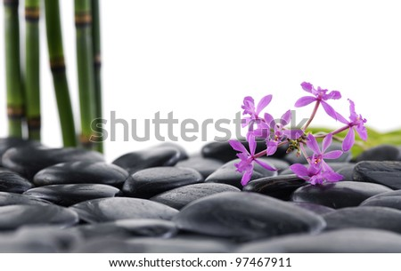 still life with thin bamboo grove and branch orchid on pebbles