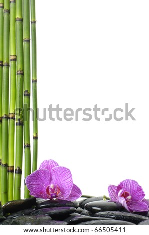 Still life with thin bamboo grove and pink orchid on pebble