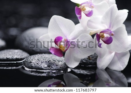 still life with white orchid on pebble - stock photo