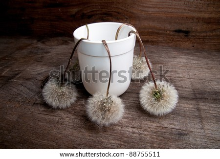 Still Life with wilted dandelions