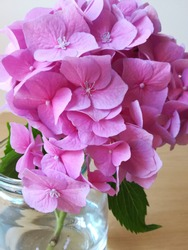 stillife-hydrangea, pink, in the waterglass