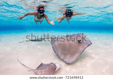 Stingray City Sandbar, Grand Cayman - Shutterstock ID 721698412