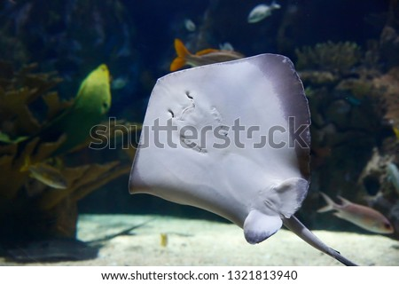 Stingray in the Zoo.