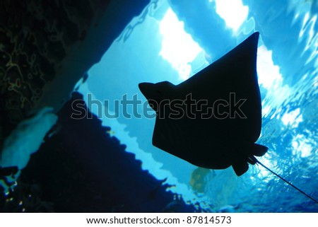 stingray silhouette in the ocean