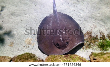 Stingrays in mexico #771924346