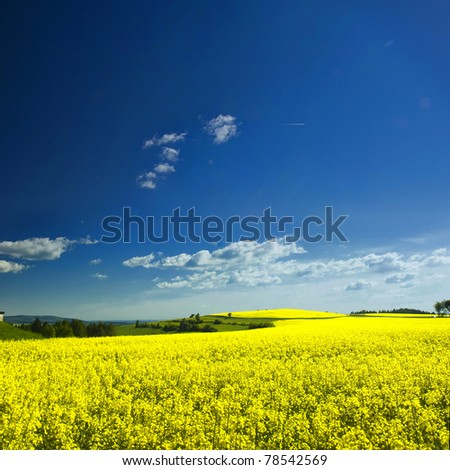 Stitched Panorama, Agriculture plots of rapeseed in summer time