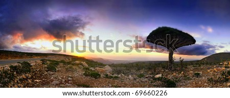 Stitched Panorama, Sunset and cloudscape over rocky landscape of Socotra or Soqotra island with lone tree silhouetted in foreground,  Indian ocean.