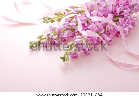 stock flower and ribbon on pink background