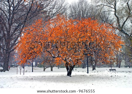 Stock image of a snowing winter at Boston, Massachusetts, USA