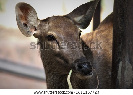 Stock image of close up deer for animal lovers