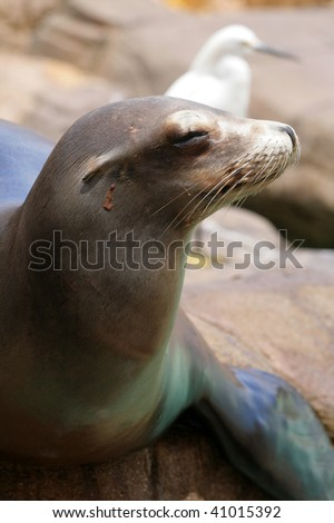 Stock image of seal #41015392