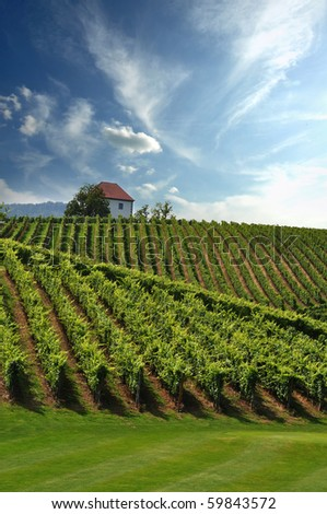 Stock Photo: House in the vineyards in summer.Slovenske Konjice, Slovenia