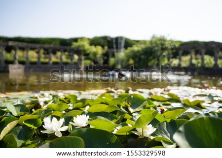 Stock photo of a Flowering white water lilies with fountains in the background with the jet of water coming out. Travel #1553329598