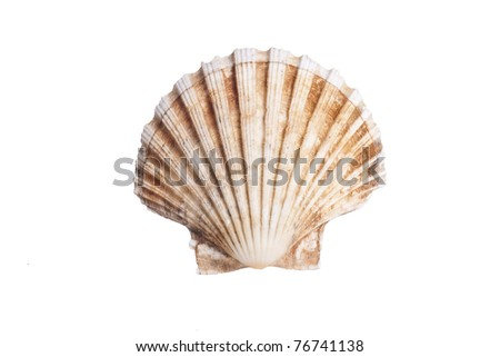 stock photo of sea scallop shell
