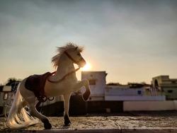Stock photo of white color plastic horse toy kept on floor under bright sunlight on blur background at Gulbarga Karnataka India.