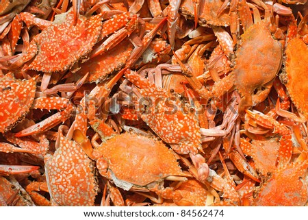 Stock Photo: Pile of freshly steamed Maryland Blue Crabs