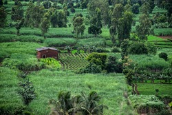 Stock photo small red brick farm house situated in the middle agricultural land surrounded by different trees and crops in monsoon season at Indian village kolhapur maharashtra India