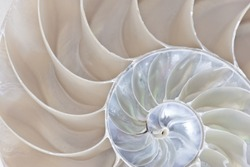 Stock photograph of a Half Shell Nautilus pompilius