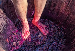 Stomping grapes - man's feet with hairy legs in wooden barrel with smushed up grapes