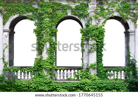 Stone arch covered with green ivy. Arch in greenery on a white background.