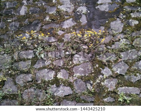 stone background landslide boards overgrown with flowers, images lack focus