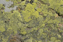 stone background with rough textured surface and Lichen Moss. mineral with rough structure and Lichen rhizocarpon on stones south Ural Mountains. mountain backdrop